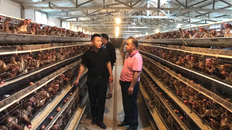 |鸡先生|80创业型农场是如何应对环保压力?