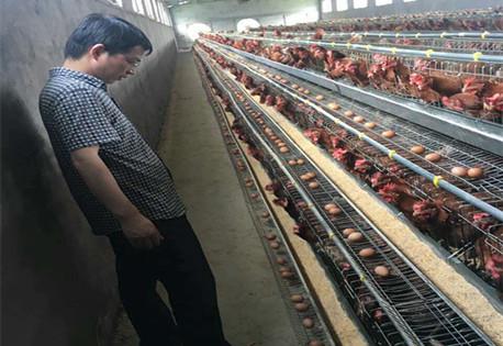 如何通过饲喂防止鸡中暑?
