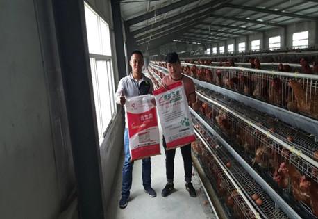鸡支原体病的症状及防控方案